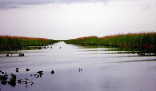 the everglades florida